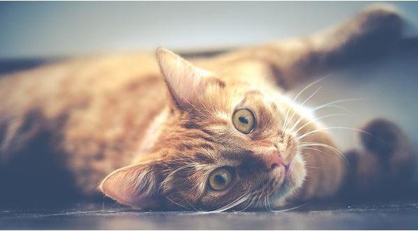 kediler-icin
