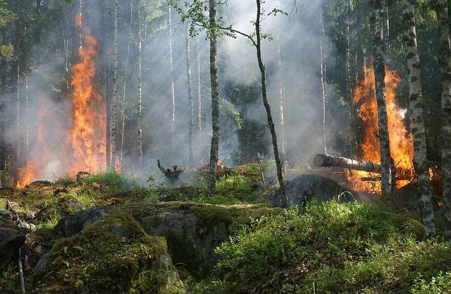 ormanlarin-yanginlari